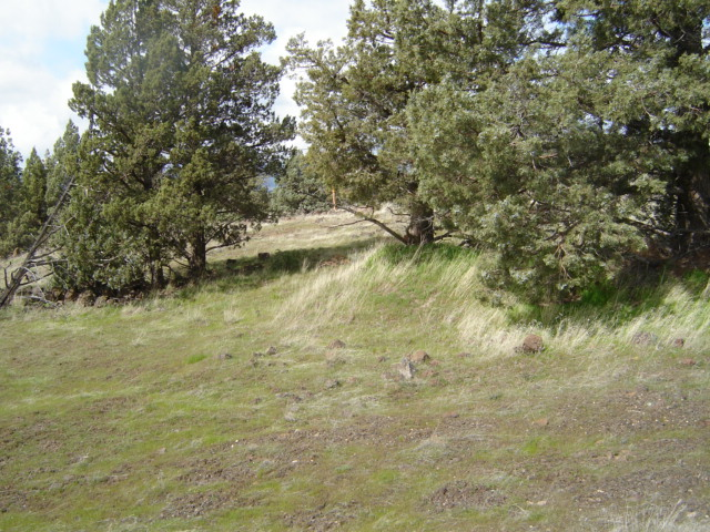 Montague Siskiyou County CA